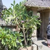 Bali2015-13-003