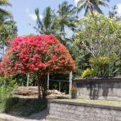 Bali2015-13-011