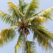Bali2015-13-012