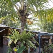 Bali2015-13-037