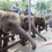 Bali2015-02-025