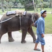 Bali2015-02-041