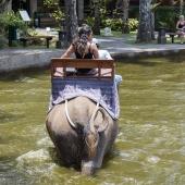 Bali2015-02-065