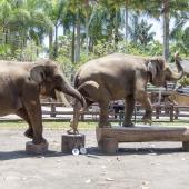 Bali2015-02-068