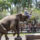 Bali2015-02-073