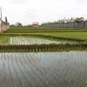 Bali2015-03-001