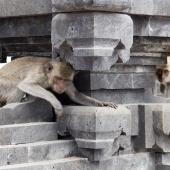 Bali2015-05-018