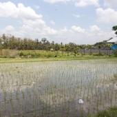 Bali2015-07-006