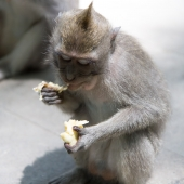 Bali2015-07-015