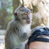Bali2015-07-023
