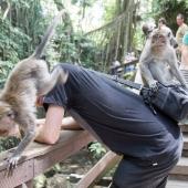 Bali2015-07-044