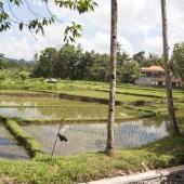 Bali2015-08-003