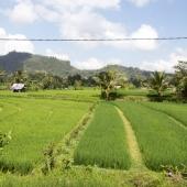 Bali2015-08-004