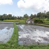 Bali2015-08-006
